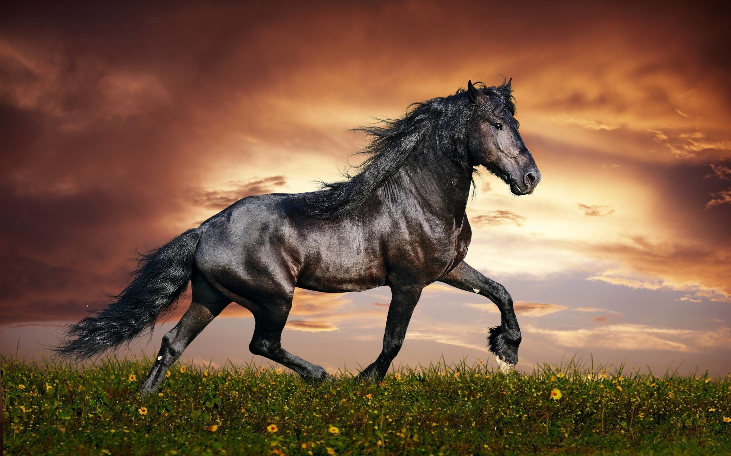 Horse PC Wallpapers - 4k, HD Horse PC ...