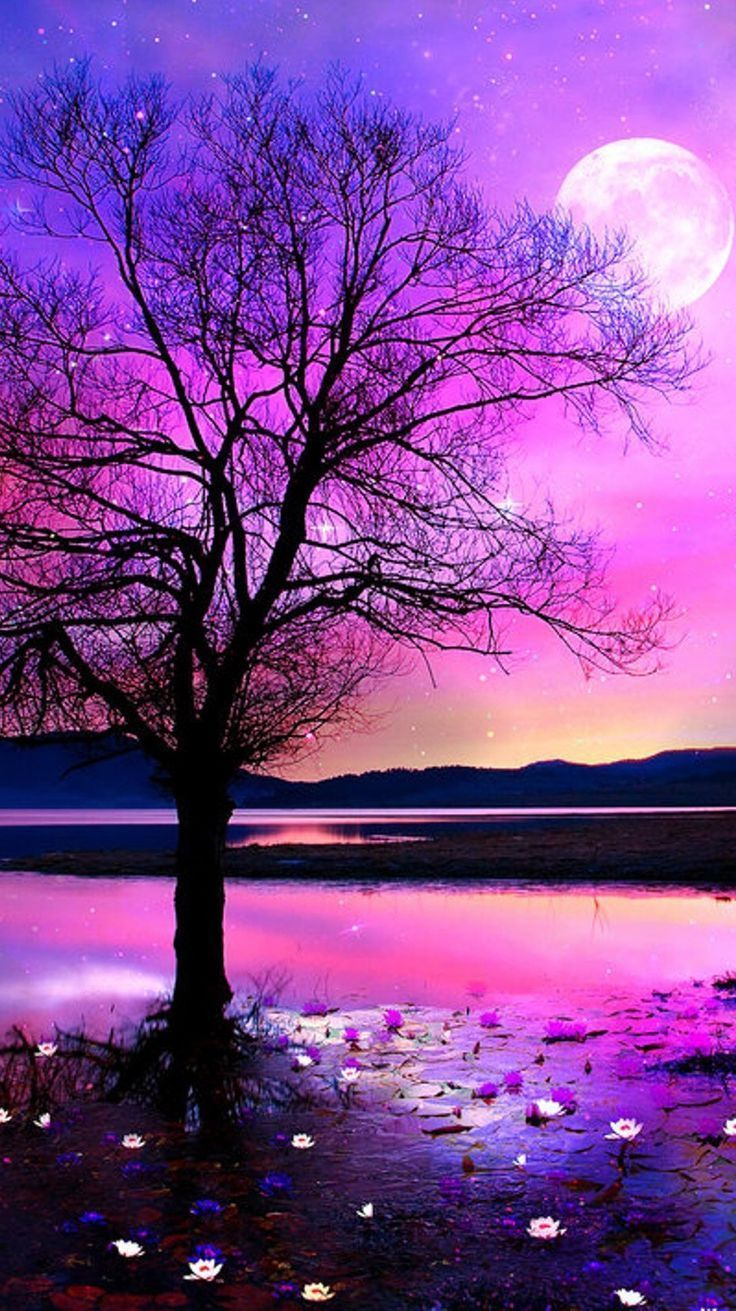 Cute Nature Wallpapers 4k Hd Cute Nature Backgrounds On Wallpaperbat
