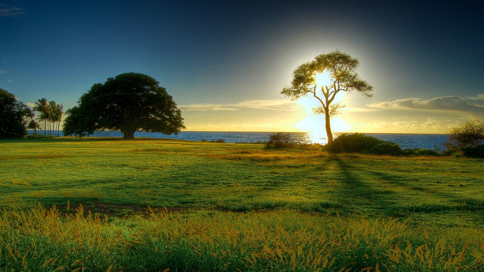 Nature Wallpapers 4k Hd Nature Backgrounds On Wallpaperbat